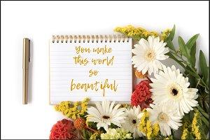 8 Mockups Gerber Daisy Wild Flowers