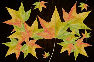 Autumn Leaves Background Color