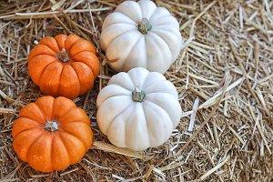 Pumpkins for sale at market