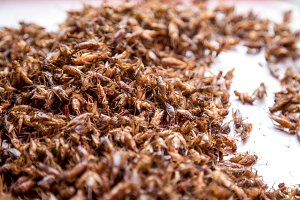 Thai traditional food grasshoppers,larvae