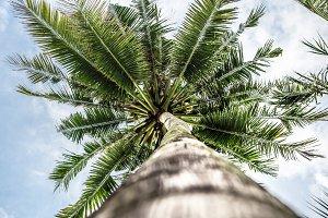 palm tree bottom view