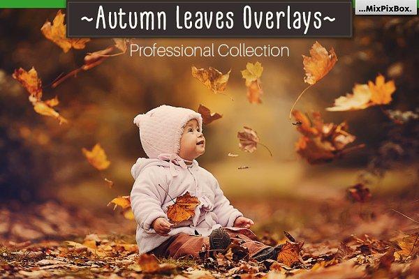 Autumn Leaves Overlays
