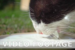 Cat is drinking milk from cat bowl in slow motion
