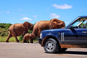 Elephants and a Car