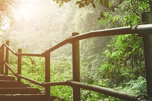 Hiking trail through the foggy jungle with sunlight commming through