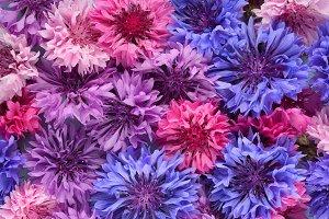 Organic background of cornflowers
