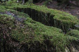 Mossy crevice ledge