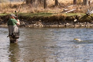 Fly Fishing in the Yampa River