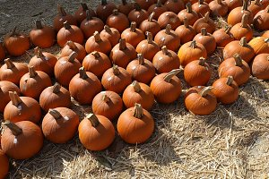 Pumpkin at local market