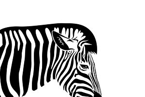 Vector of an Zebra head.