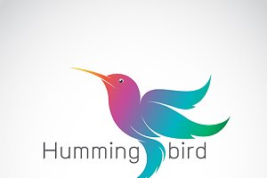Vector of a hummingbird design.