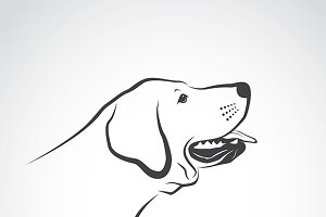 Vector of a labrador dog head.