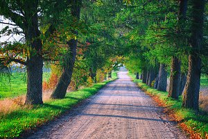 The road in an oak alley in autumn