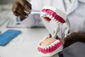 Dental jaw model at clinic