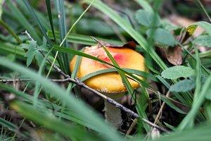 Tricky mushroom