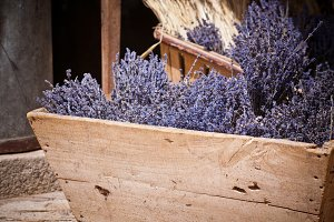 Lavender bunches selling in an outdo