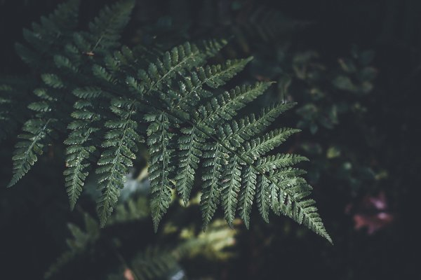 Abstract Stock Photos: PhotoMarket - Dark Fern in Moody Vintage Colors