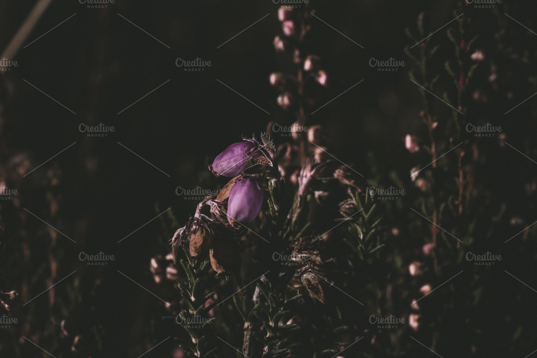 Dark Floral Background High Quality Nature Stock Photos