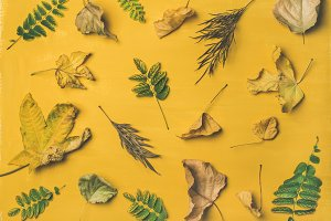 Autumn or Fall pattern & background