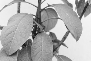 Branch Leaves Background