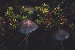 Macro World with Mushrooms and Moss
