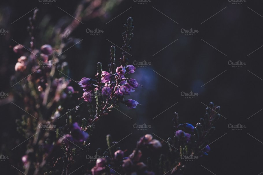 Purple Flowers And Dark Background Abstract Photos Creative Market