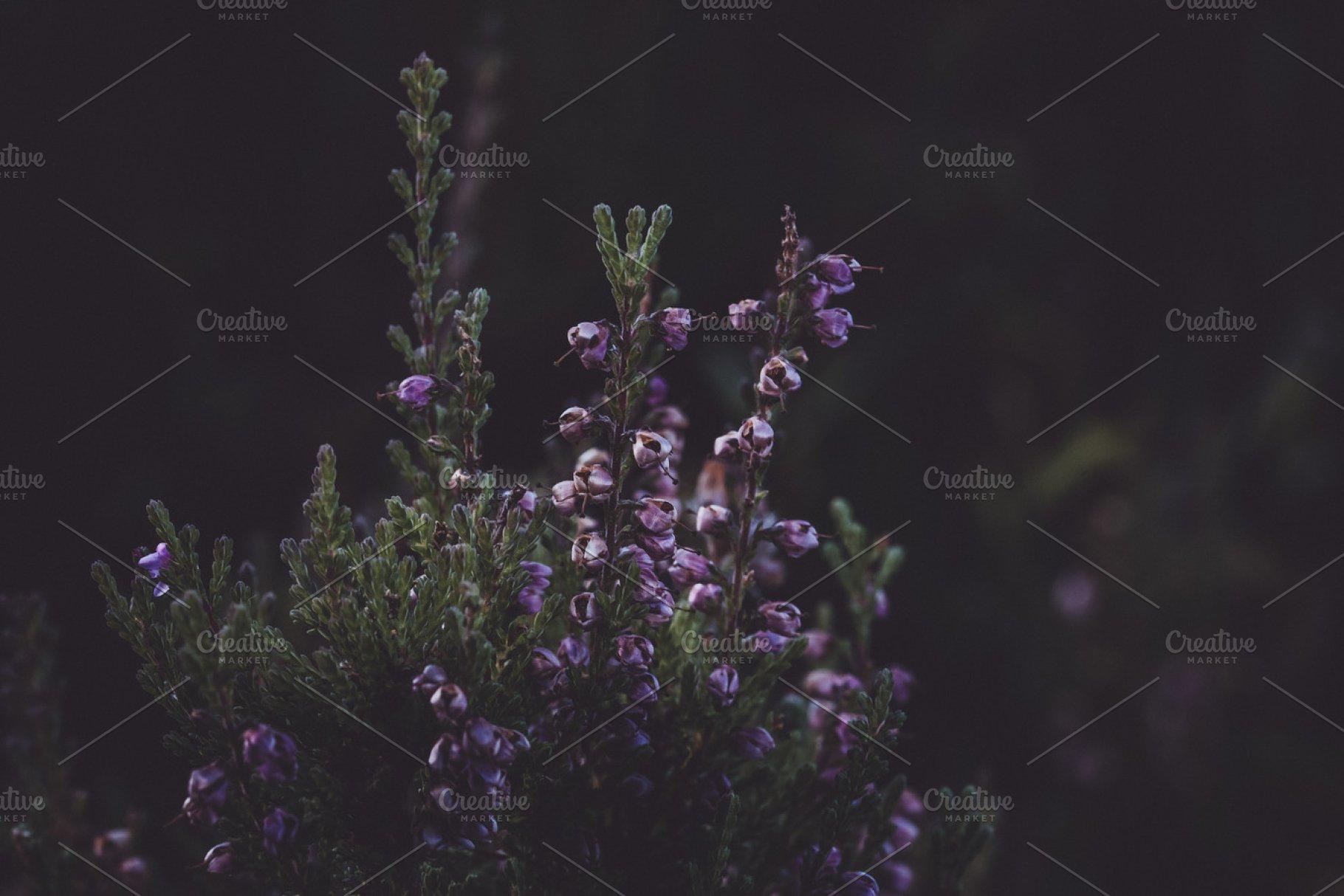 Minimal Dark Flower Background High Quality Nature Stock Photos