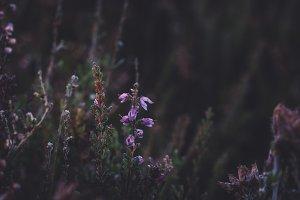 Dark Flowers in Vintage Colors
