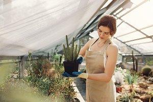 Gardener taking care of cactus