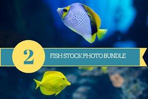 Fish Stock Photo Bundle