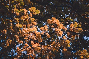 Autumn Leaves in Colorful Tones