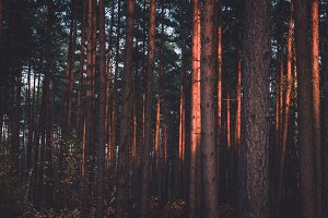 Dark Forest in Sunset Colors
