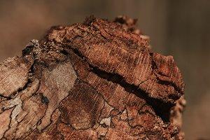 Abstract Tree Bark Texture (4/4)