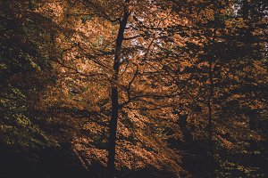 Beautiful Trees in Autumn Forest