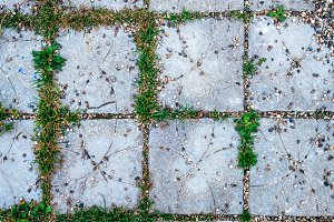 Tile in the city with small stones and grass sprouts between the tiles. Summer style road on the playground.