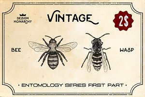 VINTAGE INSECT GRAPHIC