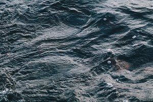 Close-up of autumn stormy water in the gulf of Finland