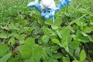 Grumpy in clover