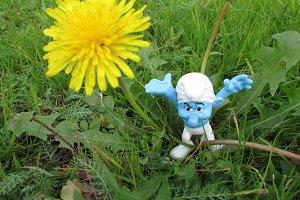 Grumpy vs. Dandelion