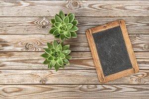 Succulent plants vintage chalkboard