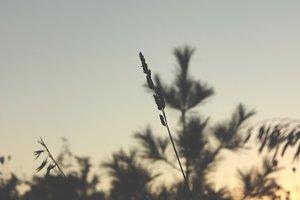 Fields of Grass