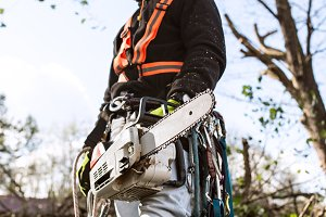 Lumberjack with chainsaw and harness going to prune a tree.