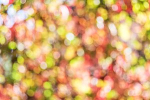 Blurred colorful autumn leaves