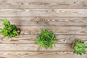 Succulent plants wooden background