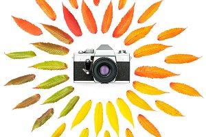 Autumn leaves vintage photo camera