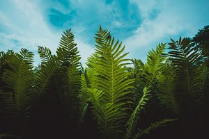 Fern against the blue sky