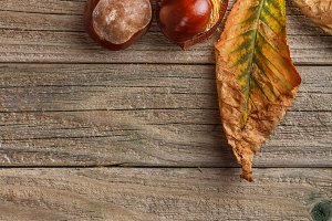 Autumn leaves and fresh chestnuts