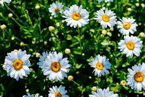 Stop & Smell The Daisies by JL