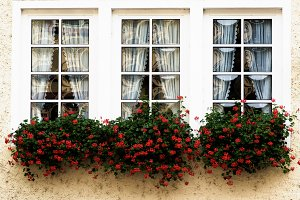 Windows with Flower Sill