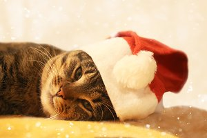 Funny cat in red Christmas cap